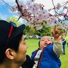 お花見はアジア文化なのかしら?