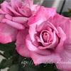 """【庭】Rosa.min """" Ben Moon """""""