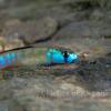沖縄で出会った魚たち