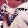肥大型心筋症で猫が急死した話