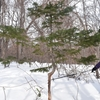 【旅行記】札幌・網走⑨〜動物たちのサインがいっぱい 雪山でスノーシュー体験〜