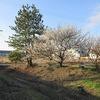 登校の風景①:線路脇の木がなくなっていました