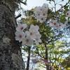 【三重県津市】また来年…津偕楽公園をお散歩してきました
