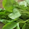 冬のほうれん草はビタミンC倍増?栄養を無駄にしない調理法とは