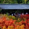 【京都東山区】秋のおすすめ!約2000本の紅葉が広がる渓谷が美しい「東福寺」。重森三玲の庭も必見!