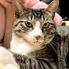 猫のドア傷つけ対策「鯛ガード」