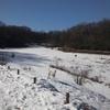 犬も雪道ですべる!