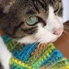 猫マフラーを編んでみた