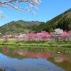関市武儀地域の桜開花速報!!武儀のお花見はここで決まり♪