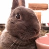 【ウサギの食欲不振・食べない・復帰するまでの軌跡・備忘録用】元気がなくて食べてくれないうさぎさんへ