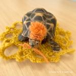 我が家の食洗機リフォーム案件|かぎ針編み教室無事終了!ドイリーの亀の服紹介します!