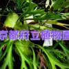 日本一の植物園、京都府立植物園に行こう。京都観光にもオススメのスポットです。