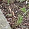 小さな春の庭 Ⅲ