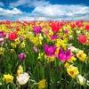 つれづれなる春の日