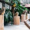 掛川花鳥園のパラダイス度