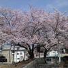 桜の名所の公園巡りハイキング