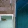 六鱗飼育環境へ導入作業。