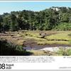 山の自然学カレンダー2020 8月・屋久島花之江河のヤクシカ親子
