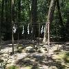 春日大社/あちこちに神の依り憑く磐座(いわくら)。石であったり、大木であったり。神の御座所です。