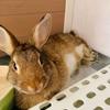 ウサギのかわいい写真の撮り方に挑戦 ♪