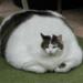 痩せようと思っても痩せないから、太ろうと思ったら太った。