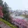 桜満開の金沢を歩く