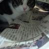 新聞猫。&小説更新♪