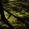 晩秋の木陰(猿江恩賜公園)
