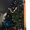 NZのクリスマスイブ前日☆