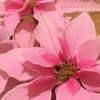 花盛りのてらっち家でございます。