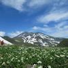 残雪の鳥海山とハクサンイチゲ