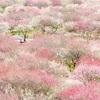 いなべ市 鈴鹿の森庭園 梅の花