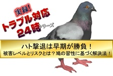 ハト撃退は早期が勝負!被害レベルとリスクとは?鳩の習性に基づく解決法!