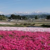 約20万株の芝桜が楽しめる魚沼市「奥只見レクリェーション都市公園」