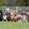 ホノルルで、人気の名前の犬は『ベラ』!?