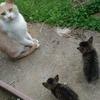 猫の写真をテキトーに投稿する
