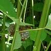 蜂の恐怖再び~2発目をくらう❗