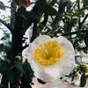 花は、花は、花は咲く 3.11東日本大震災から今日で9年