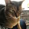 【猫さんと暮らす】「はんかくさい」は方言ですか【北海道】