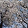 東京には空が無い、札幌には桜が無い