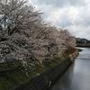 「桜の開花宣言」の影で...