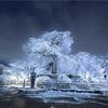 京都・東山 - 雪の華咲く 祇園しだれ