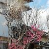 春の花とびんのゴミ