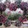 特大の花飾り③:松江フォーゲルパーク(島根県松江市)