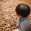 子どもも大人も楽しめる!「東京おもちゃ美術館」で木のおもちゃのぬくもりを感じてきた!