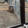 五月山動物園〜無料で遊べる動物園〜