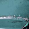 【前兆現象】古くから地震の前兆と言われている『リュウグウノツカイ』が5月20日に長崎県北松小値賀町班島郷の班漁港内で見つかる!この他にも各地で『サケガシラ』・『ザトウクジラ』も!地震との関係は科学的な根拠は無いとのことだが、『南海トラフ地震』などの巨大地震が心配!