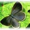 昆虫の観察