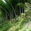 竹の焼畑2017-sec.27