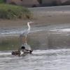 キヤノンSX70HSで野鳥を撮るよ